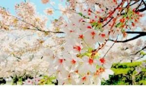 微信生日祝福语加表情 祝福老爸生日的微信祝福语
